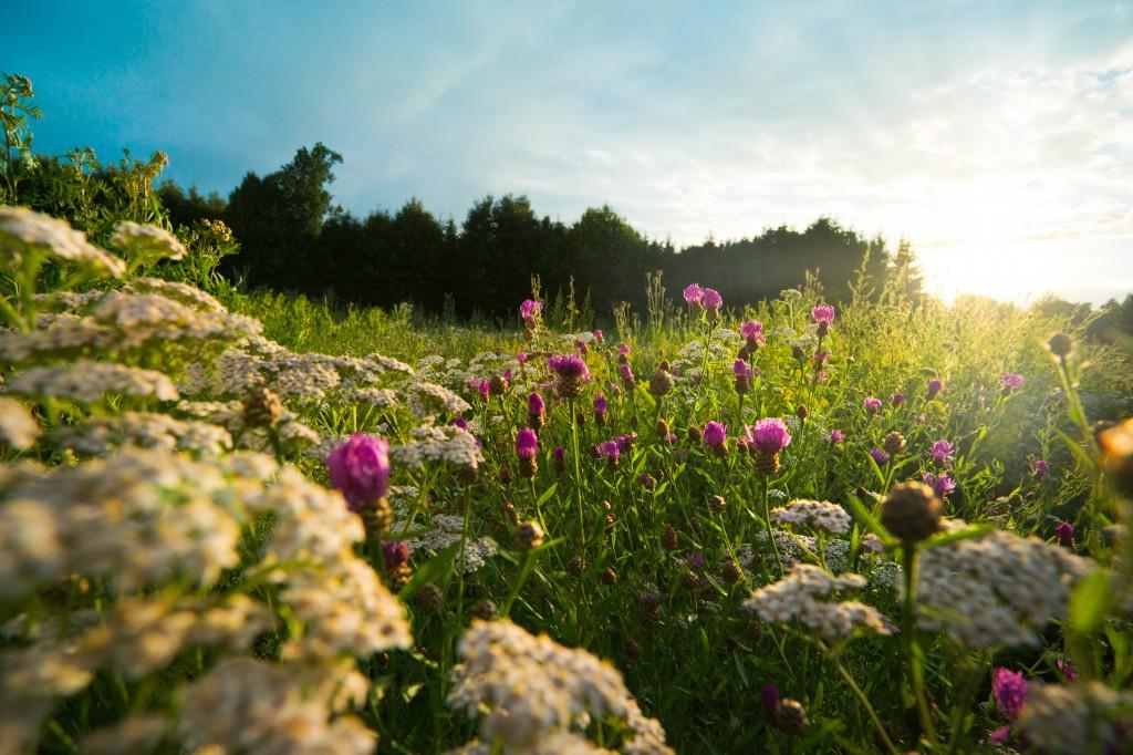 Krajobraz łąka