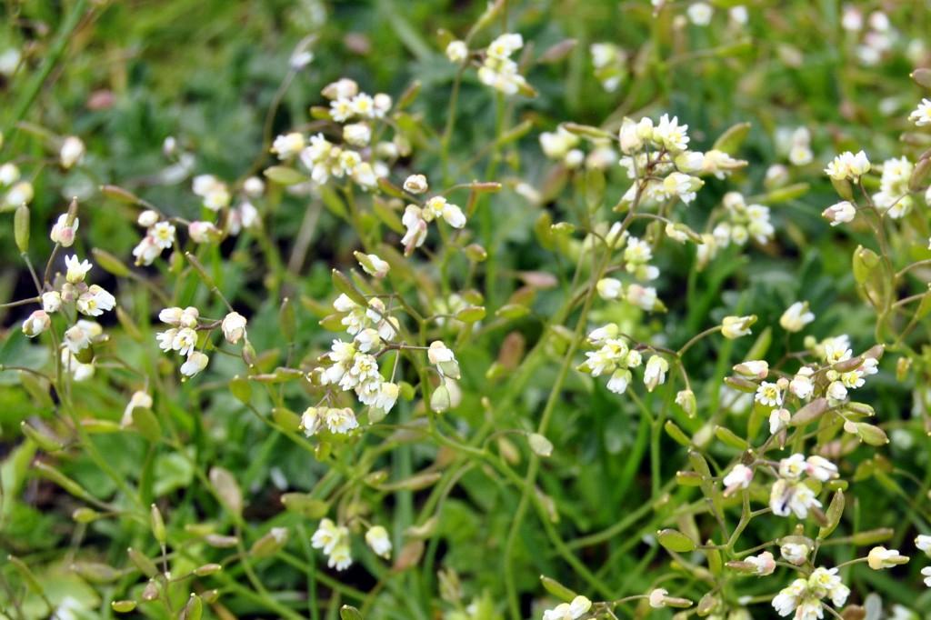 zdjęcia kwiatów