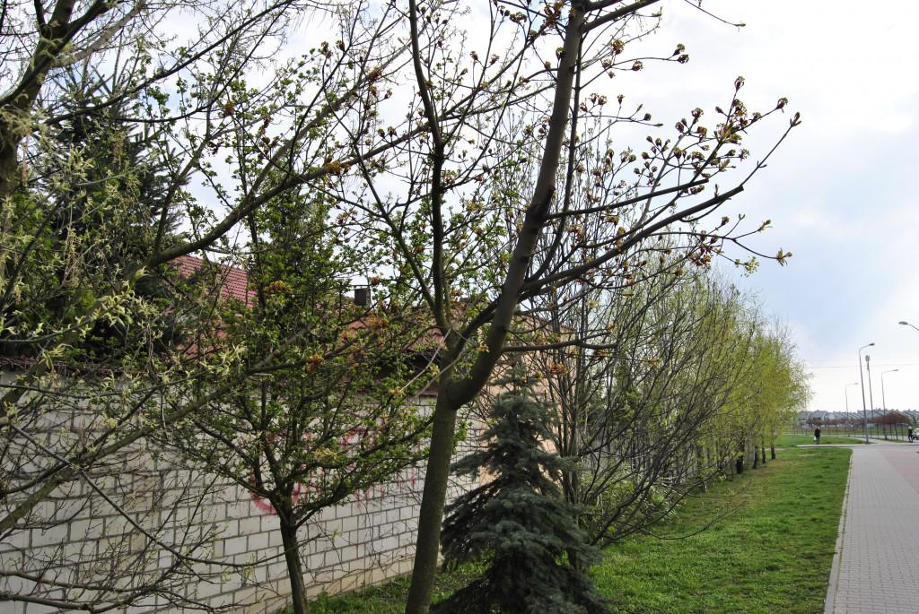 zdjęcie wiosenne