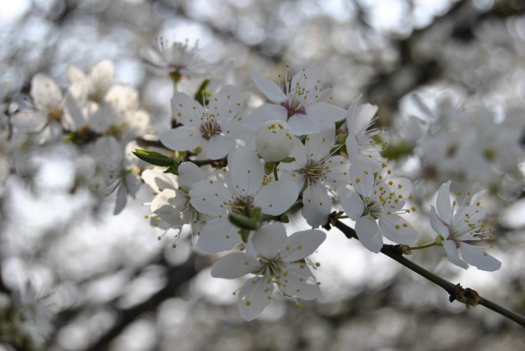 zdjęcie kwiatów
