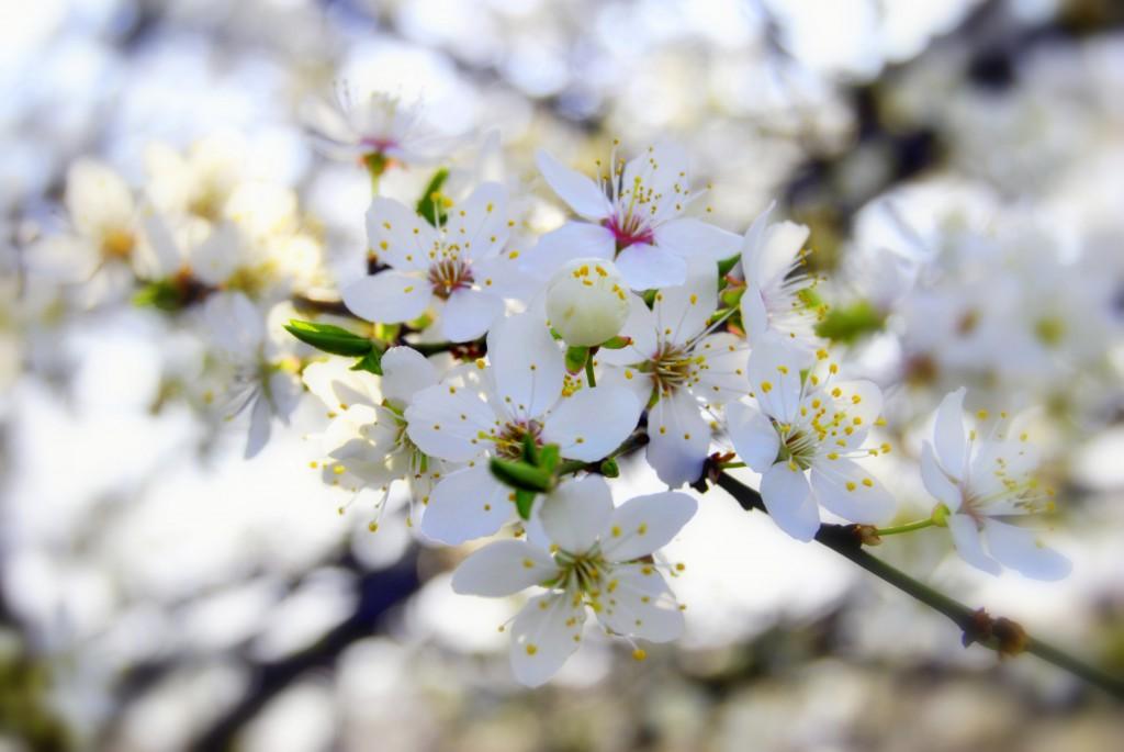 zdjęcie kwiatów poprawione