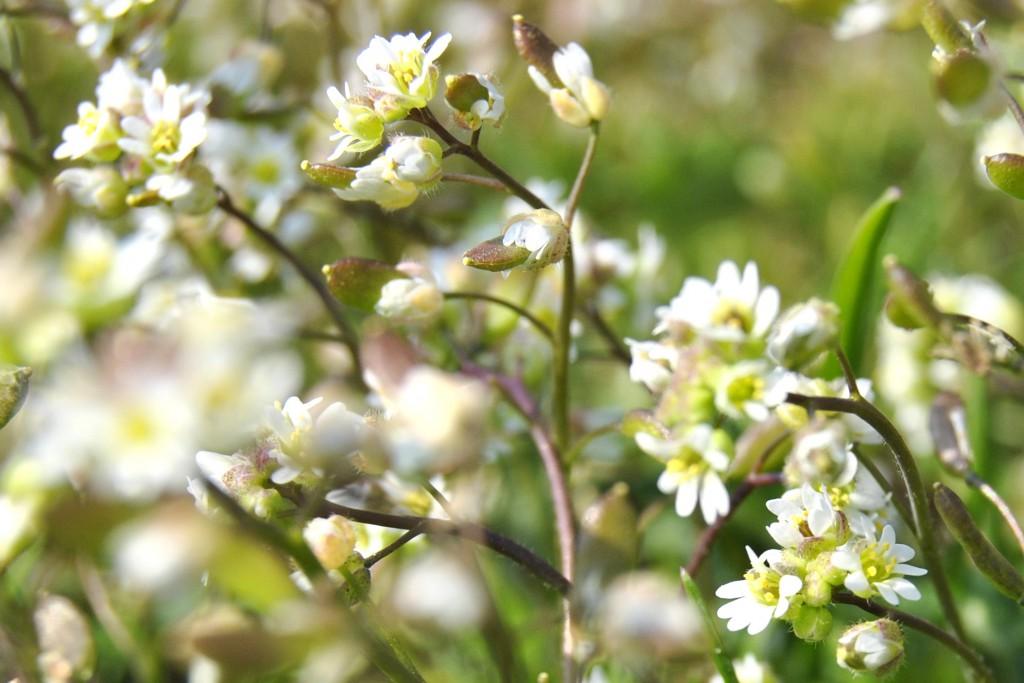 Te malutkie białe kwiatki, były niemal niezauważalne, ale oko fotografa dostrzeże wszystko:)
