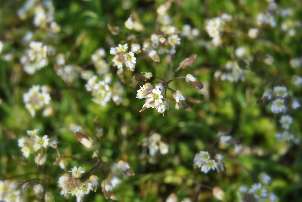 fotografie kwiatów