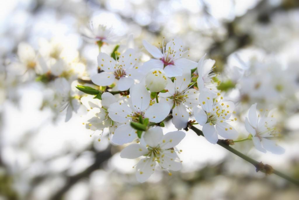 A to najpiękniejszy i najbardziej pachnący znak wiosny:)