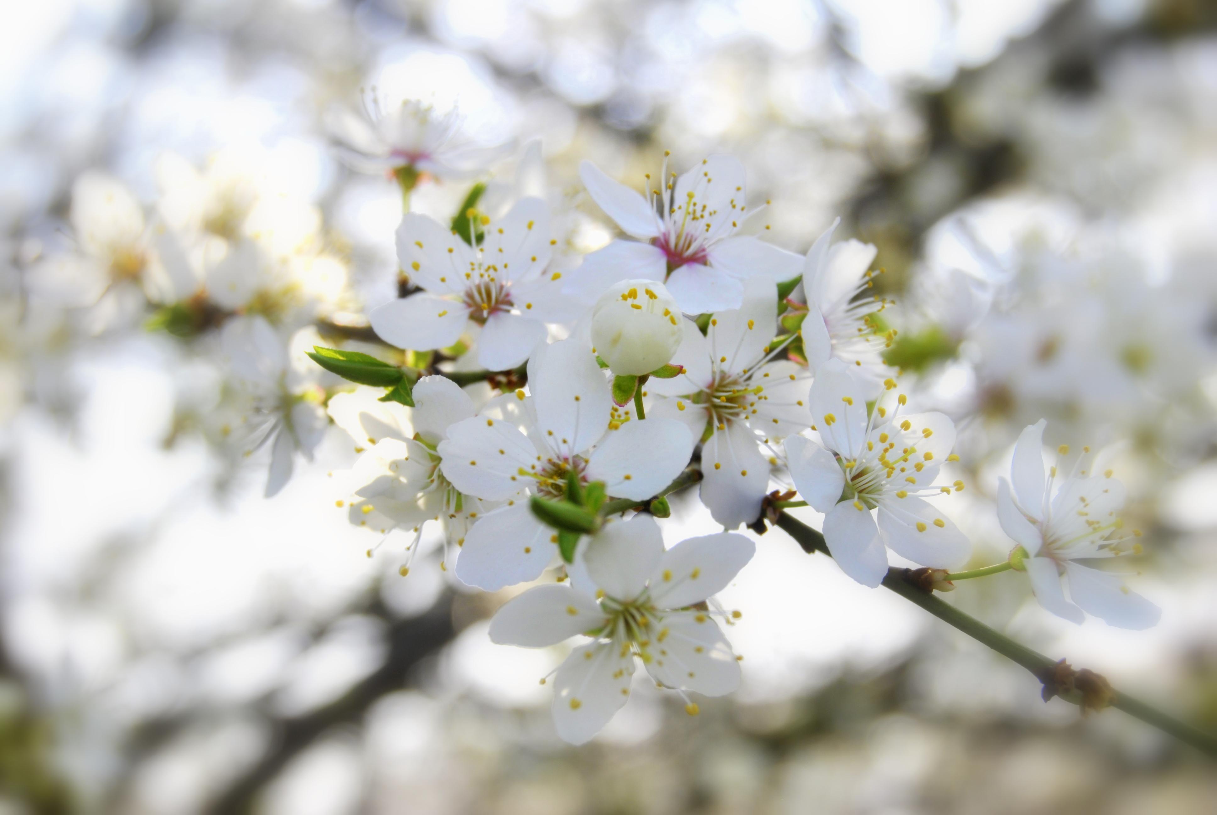 zdjecia-wiosny-07.jpg