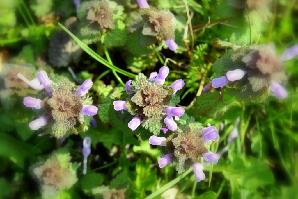 Te kwiaty przypominały mi kosmitów:)