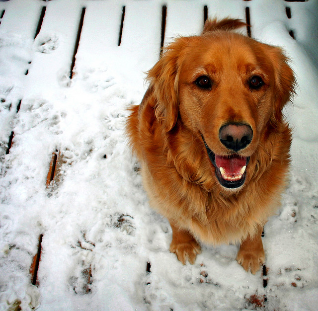 pies zdjęcie