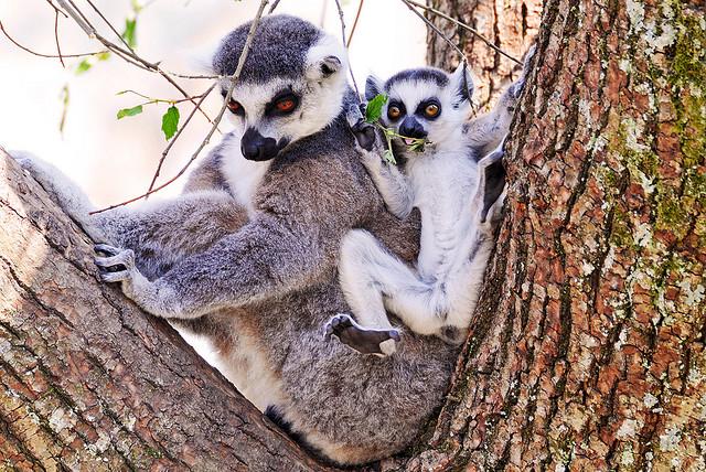 mama z dzieckiem małpy