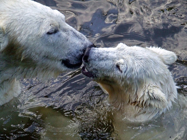 całujące się zwierzęta