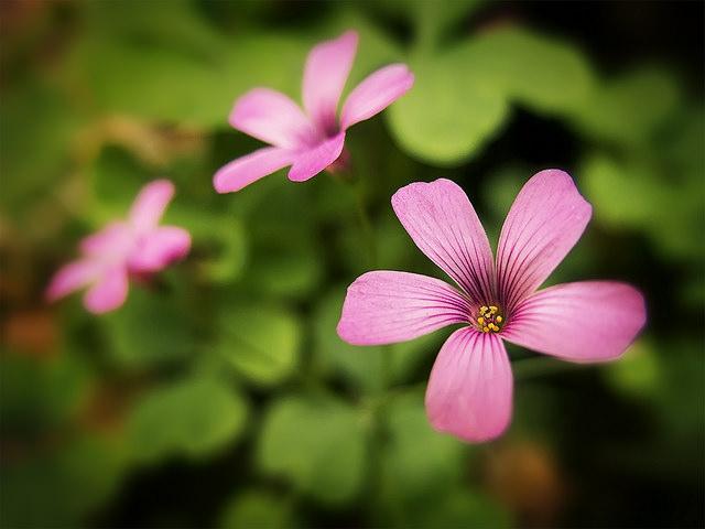 fot. flickr/tanozzo/