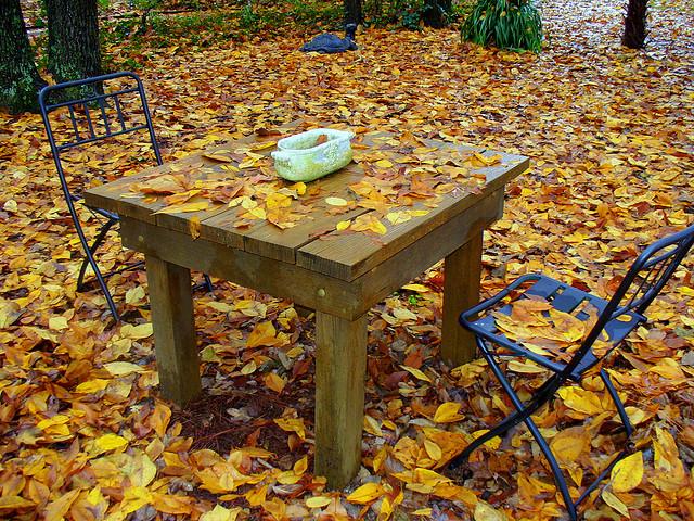 zdjęcia jesień