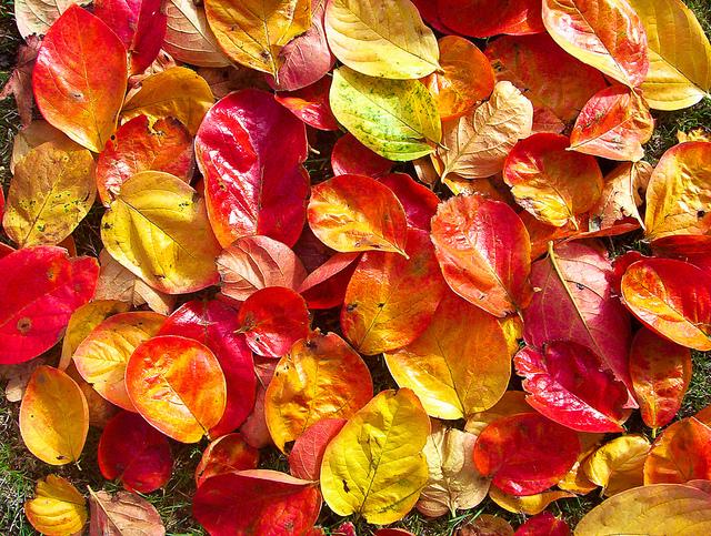 zdjęcia jesieni