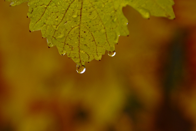 deszczowe-zdjecia-02