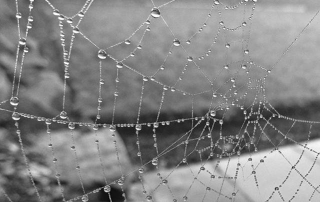 deszczowe-zdjecia-04