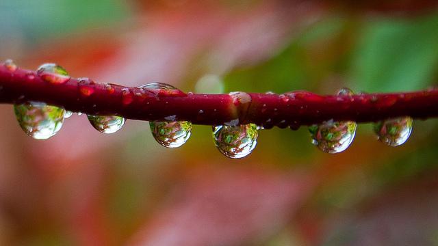 deszczowe-zdjecia-06